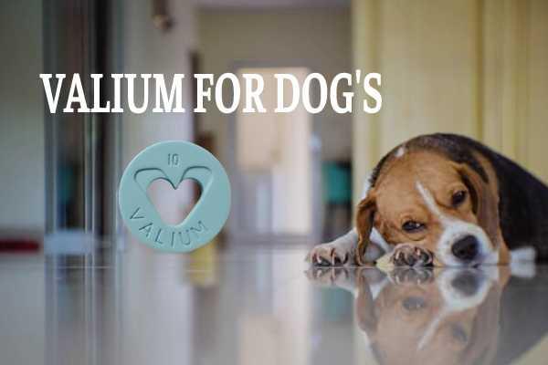 Valium for dog